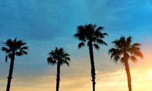 陽光照耀下的椰樹剪影攝影高清圖片