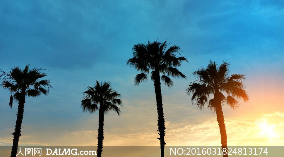 阳光照耀下的椰树剪影摄影高清图片