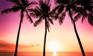 黃昏炫麗云彩椰樹剪影攝影高清圖片