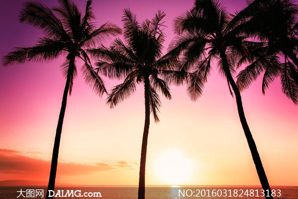 黄昏炫丽云彩椰树剪影摄影高清图片