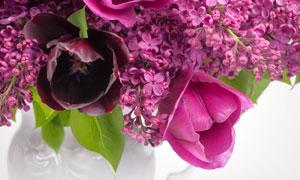 在瓶子里的鲜艳丁香花摄影高清图片