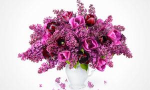 白色花瓶里的鲜艳丁香花朵高清图片