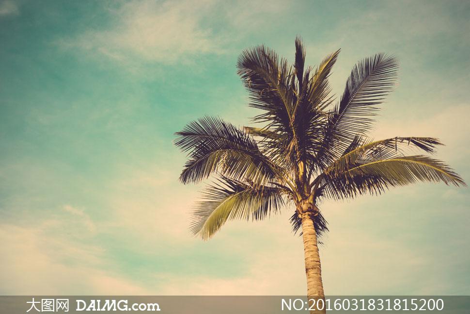 蓝天白云椰树自然风景摄影高清图片
