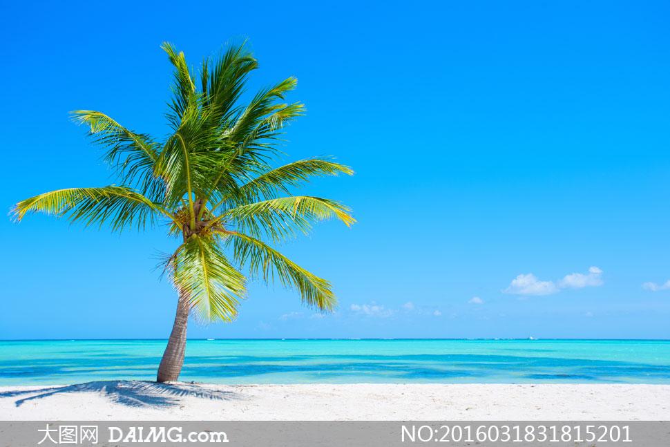 蓝天白云椰树大海风光摄影高清图片