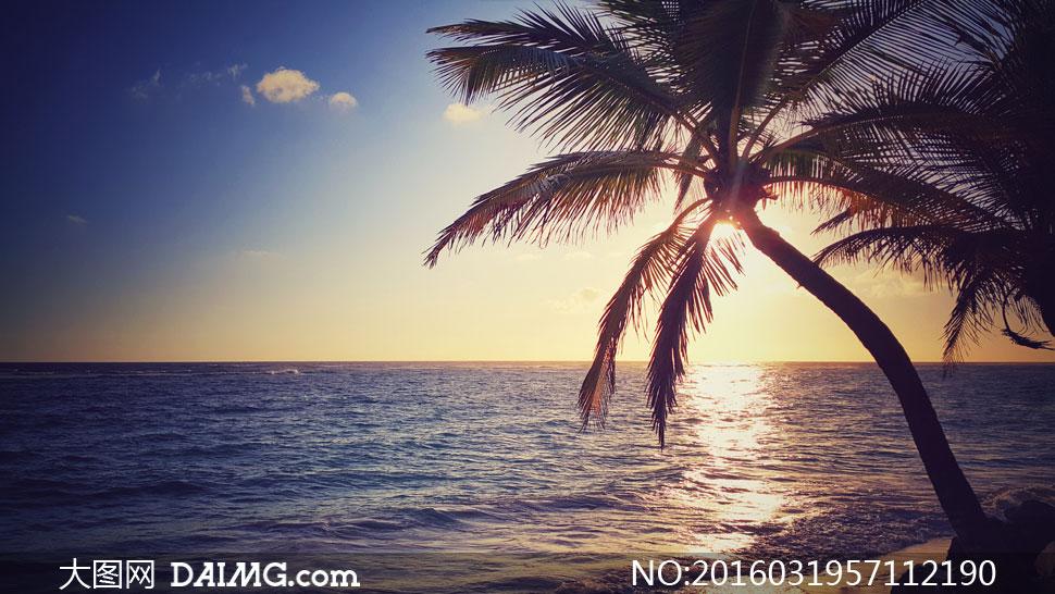 椰树与蓝天大海等风光摄影高清图片
