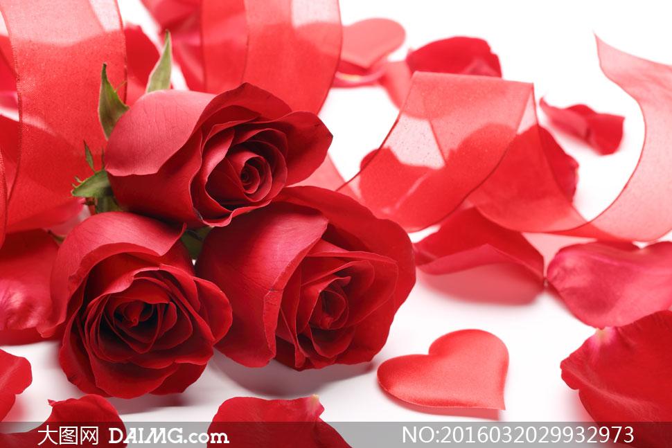 红丝带与玫瑰花朵特写摄影高清图片