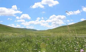 贡格尔草原景色摄影图片