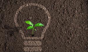幼苗与土壤上的节能灯图形高清图片
