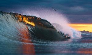 闪耀着阳光的海面波浪摄影高清图片
