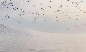 翱翔在大海之上的飞鸟摄影高清图片