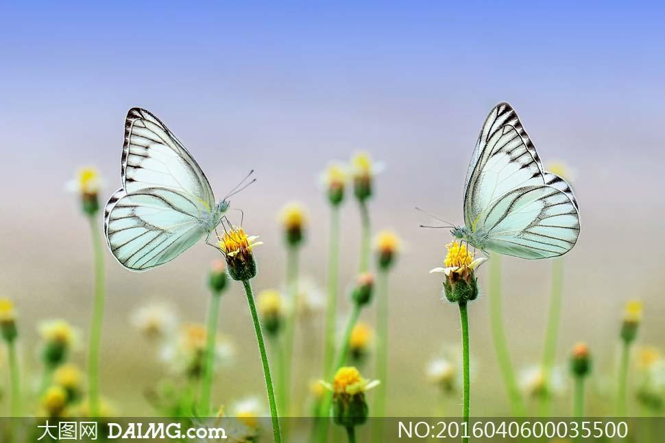 黄花花丛昆虫生物世界动物世界高清大图摄影图片素材