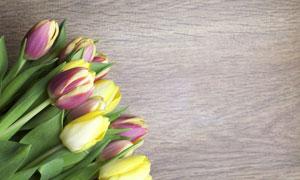 木板上是郁金香花特写摄影高清图片