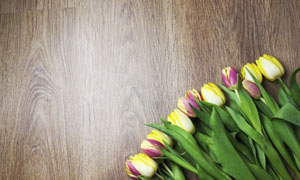 一一摆放在木板上的郁金香高清图片