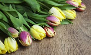 木板上的几朵郁金香花摄影高清图片