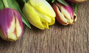 黄色等郁金香鲜花特写摄影高清图片