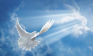蓝天白云与飞翔的白鸽摄影高清图片