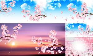 蓝天白云风景与樱花树枝等矢量素材
