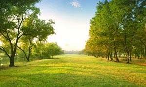 蓝天树木草地自然风光摄影高清图片
