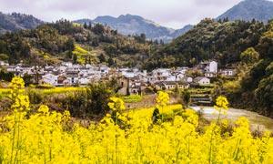 山间村庄和美丽油菜花摄影图片
