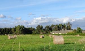 新西兰牧场风光摄影图片