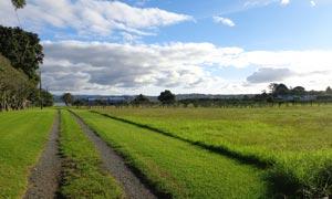 新西兰海滨农场风光摄影图片