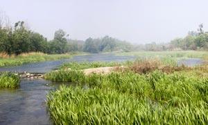 淇河湿地水生植物全屏摄影图片