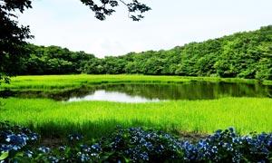 山间唯美的湖泊和水草摄影图片