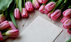 郁金香花朵与空白卡片摄影高清图片