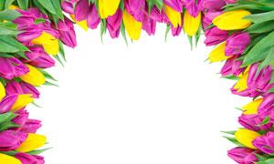 紫色与黄色花朵围成的边框高清图片