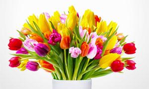 插在花瓶里的鲜艳郁金香花高清图片