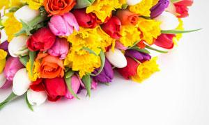 整齐摆放的郁金香花束摄影高清图片