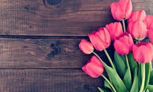 木板上的郁金香花特写摄影高清图片