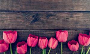 深色木板上的郁金香花摄影高清图片