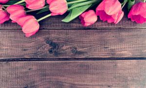 木板上的郁金香花近景特写高清图片
