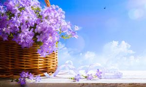 篮子里的紫色鲜花特写摄影高清图片