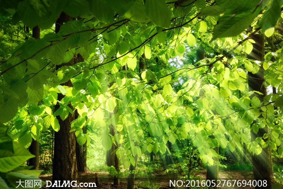透射有阳光的树林风景摄影高清图片 - 大图网设计素材