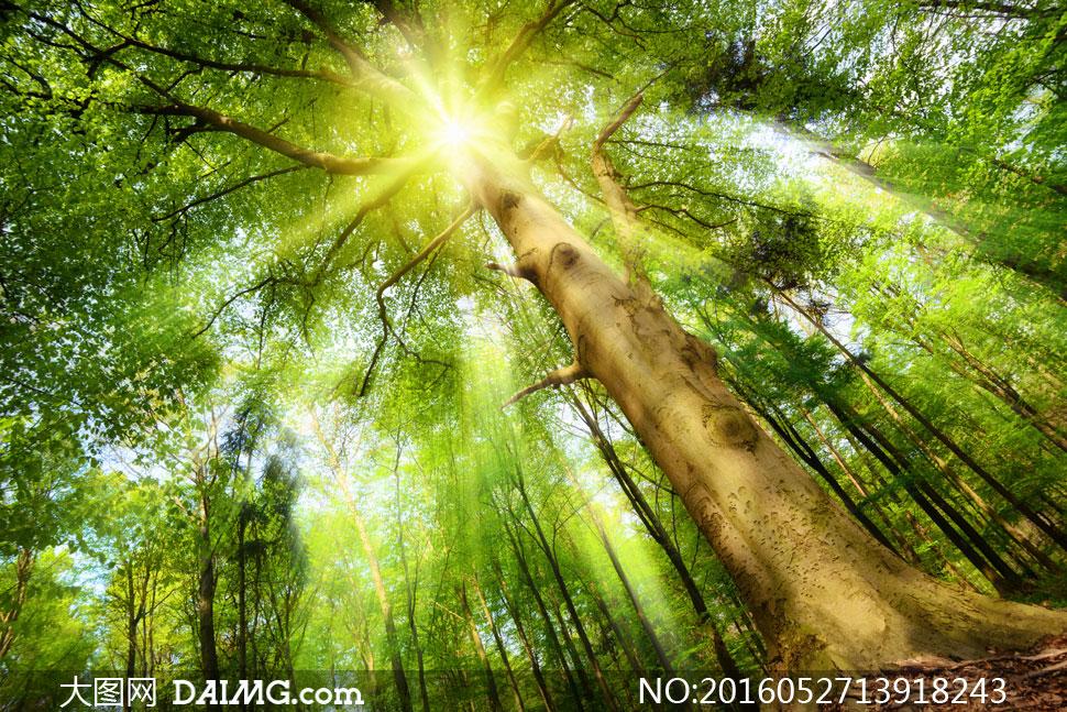 大图首页 高清图片 自然风景 > 素材信息          阳光照耀下的绿叶