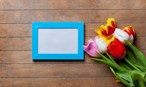 空白相框与郁金香花朵摄影高清图片