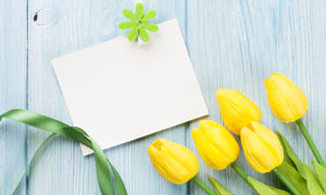 白色卡片与黄色郁金香特写高清图片