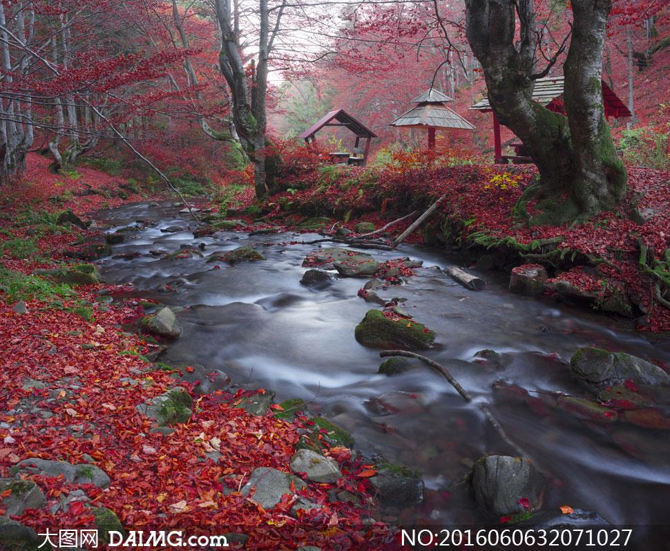 秋天红色落叶与溪水等摄影高清图片