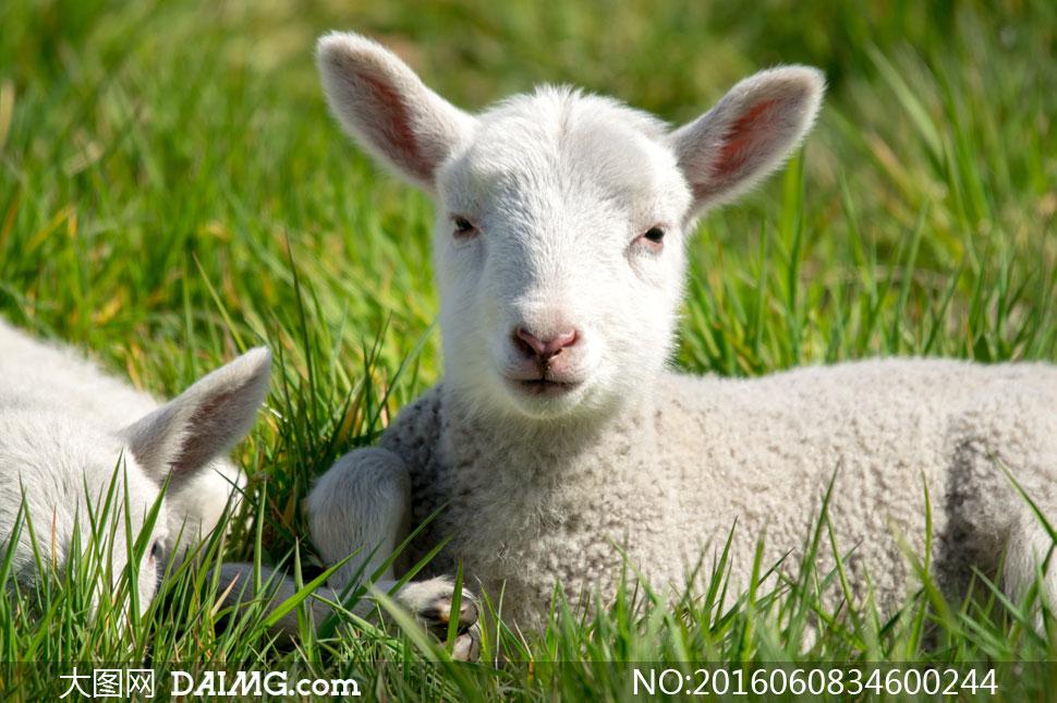 高清大图图片素材摄影近景特写微距草地动物