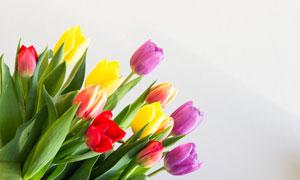 三种颜色的郁金香花束摄影高清图片