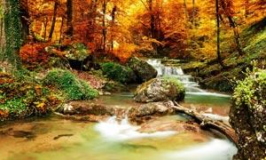 秋季森林美丽溪流摄影图片