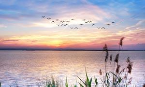 海边木桥夕阳美丽风光摄影图片