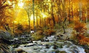 秋季森林中小溪流水摄影图片