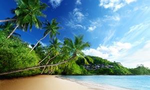 藍天白云下海洋和椰樹攝影圖片