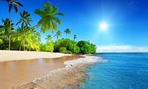 陽光下的海邊沙灘和椰樹攝影圖片