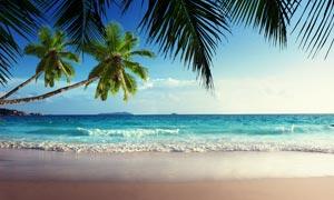 海邊唯美的椰樹攝影圖片