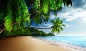 海邊美麗的沙灘和椰樹攝影圖片