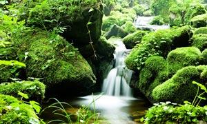 绿色青苔和小溪流水摄影图片
